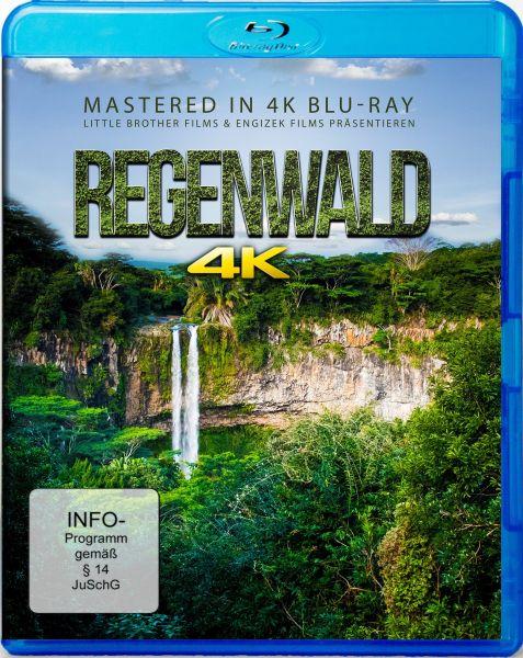 Regenwald - Rainforest - mastered in 4K